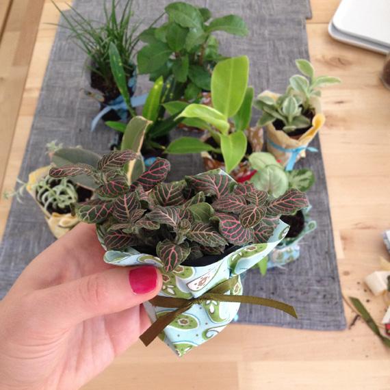 tinyplants1