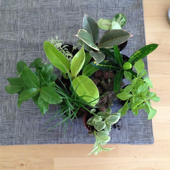 tinyplants3